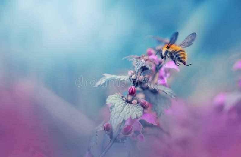 Bumblebee in wonderland royalty free stock image