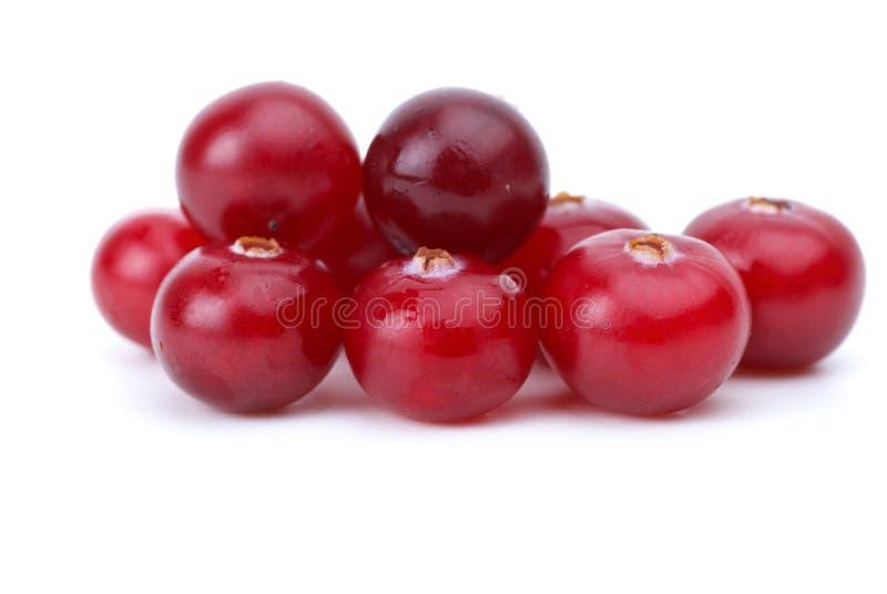 Close-up shot of few cranberries stock photo