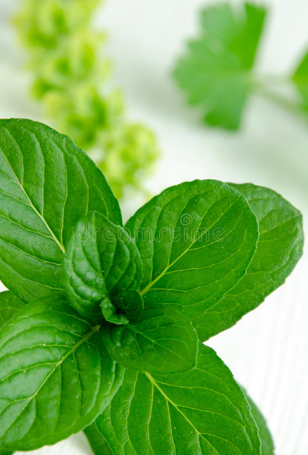 Close-up shot of fresh spearmint stock image