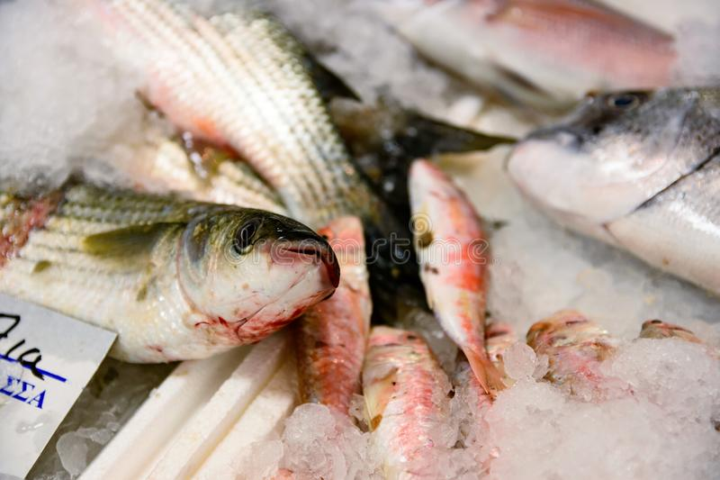 Close-Up Of Freshly Caught European Sea Bass Or Dicentrarchus Labrax On Ice For Sale In The Greek Fish Market stock images