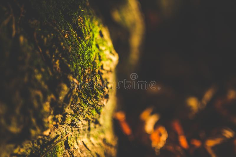Close Up Shot of Green Moss royalty free stock photo