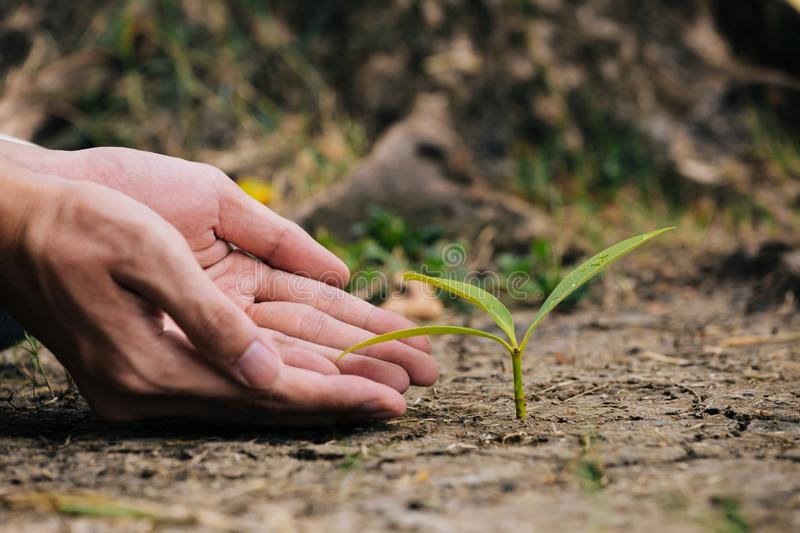 Hand planting the seedlings into the soil royalty free stock photo