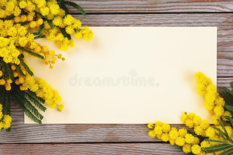 Branch of mimosa. Close up shot of mimosa flowers on wooden rustic background royalty free stock image