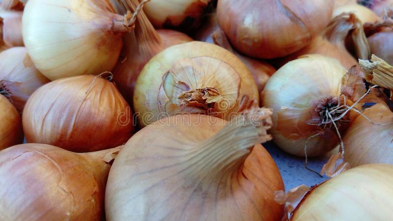 Close-up shot of the Onion royalty free stock images