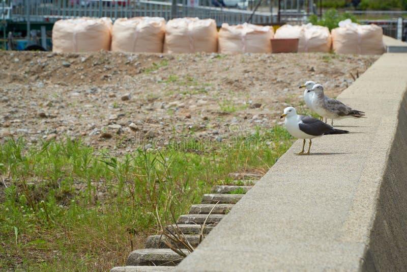 Close up shot of Seagull near the seashore stock photo