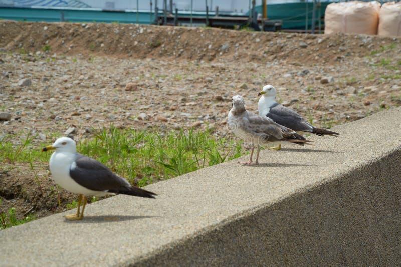 Close up shot of Seagull near the seashore stock image