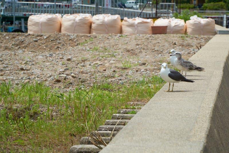 Close up shot of Seagull near the seashore stock photography
