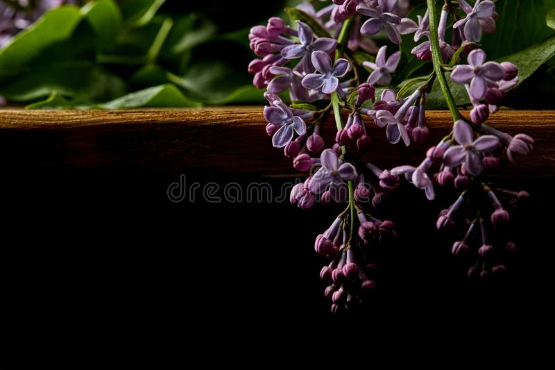 Close-up shot of spring lilac flowers on wooden table isolated on black royalty free stock images