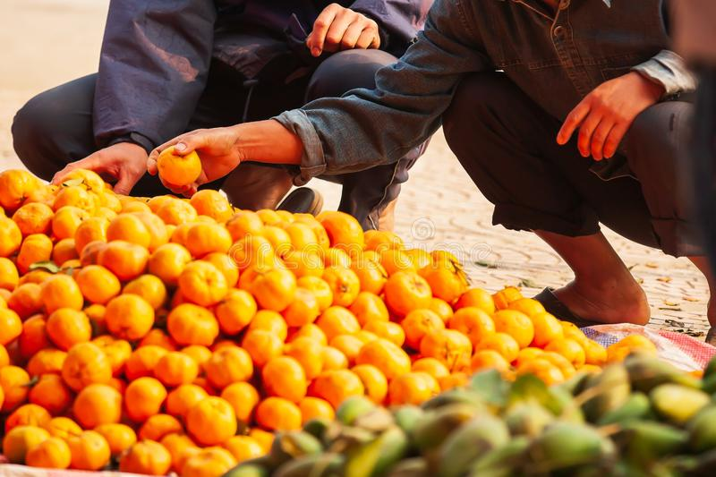 Two Vietnamese selects oranges on the roadside stock photo