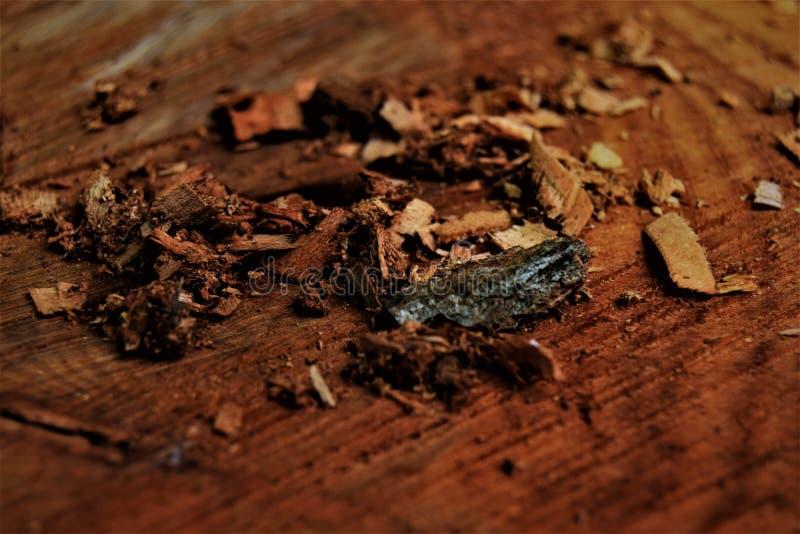 Close up Woodchips stock photos