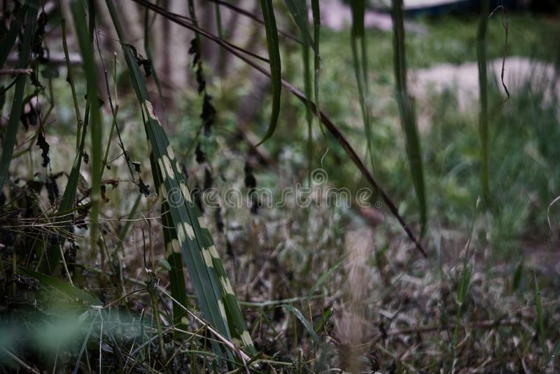 Close-up shot of zebra grass and other. Close-up photo of zebra grass and other plants in the back ground royalty free stock images