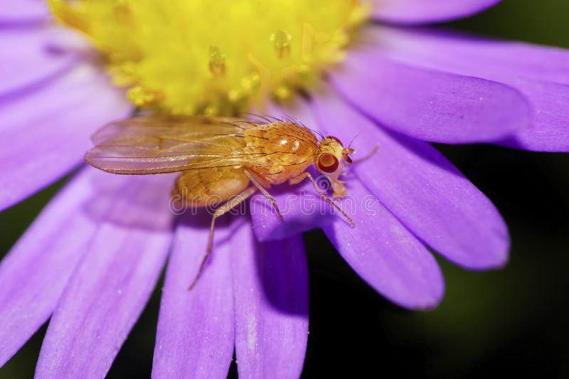 Close-up side view of Caucasian orange flower petal, flies on al stock photo