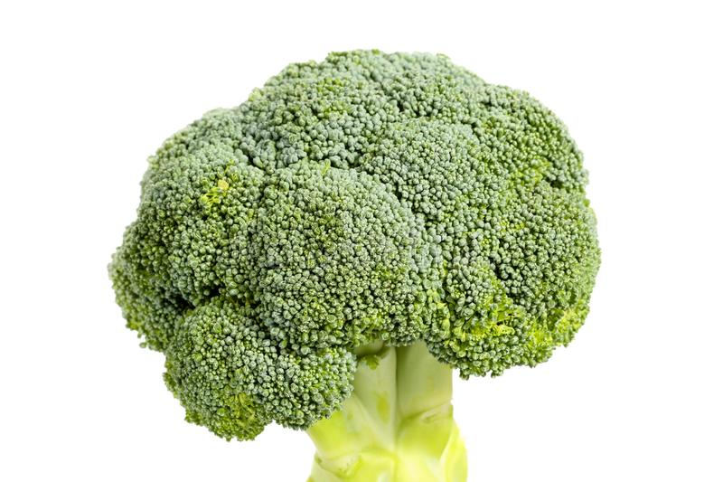 Close up, side view of a fresh, healthy organic broccoli head, isolated on white background stock photography