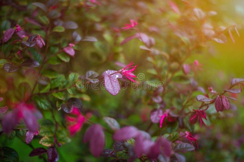Close-up sierplanten bij natuurlijk stock foto
