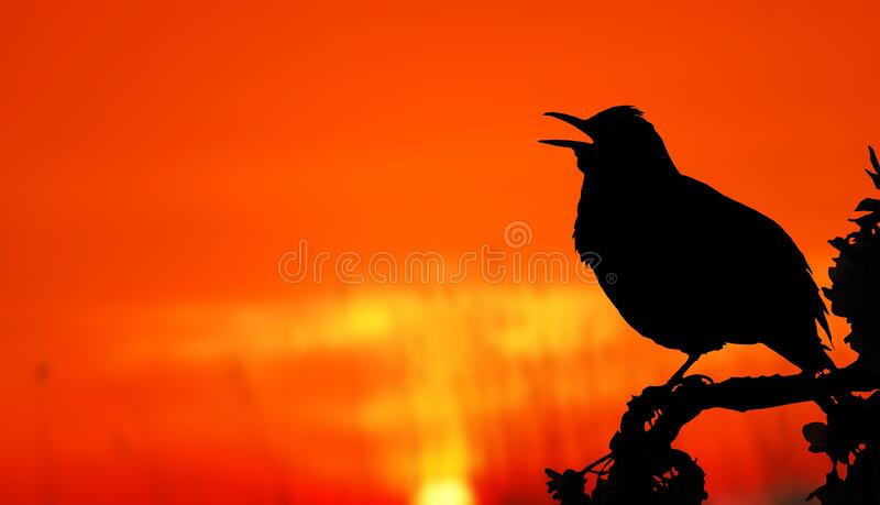 Close-up of Silhouette Bird Perching on Orange Sunset stock image