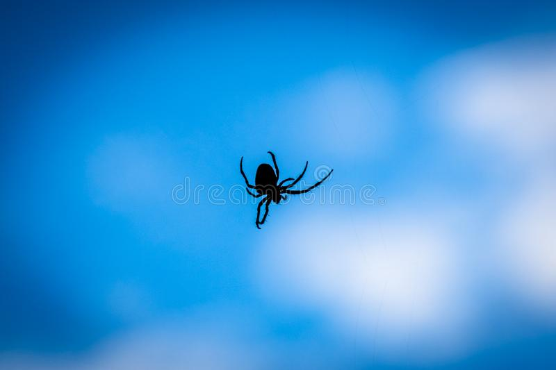 A close up silhouette of a spider with blue background. Papandayan, mountain, garut, gunung, west, java, volcano, black, web, arachnid, insect, spiderweb royalty free stock image