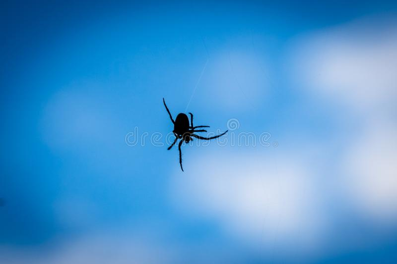 A close up silhouette of a spider with blue background. Papandayan, mountain, garut, gunung, west, java, volcano, black, web, arachnid, insect, spiderweb stock image