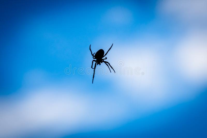 A close up silhouette of a spider with blue background. Papandayan, mountain, garut, gunung, west, java, volcano, black, web, arachnid, insect, spiderweb royalty free stock photography