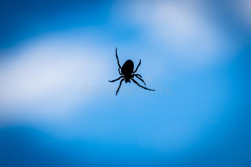 A close up silhouette of a spider with blue background. Papandayan, mountain, garut, gunung, west, java, volcano, black, web, arachnid, insect, spiderweb stock photo