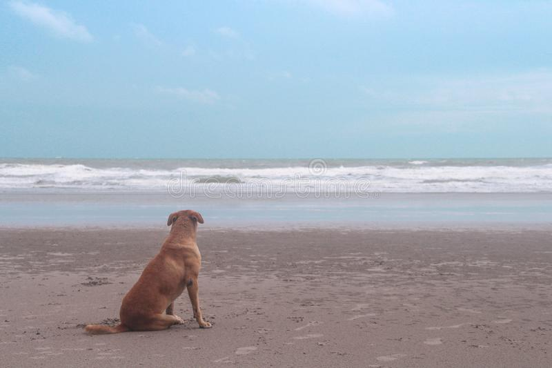 Single brown dog sitting on sandy beach and looking at the sea view with blue sky background in the morning royalty free stock images