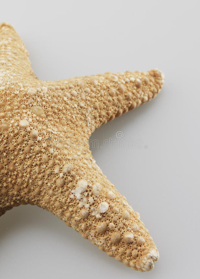 Close-Up of Single Starfish royalty free stock photography