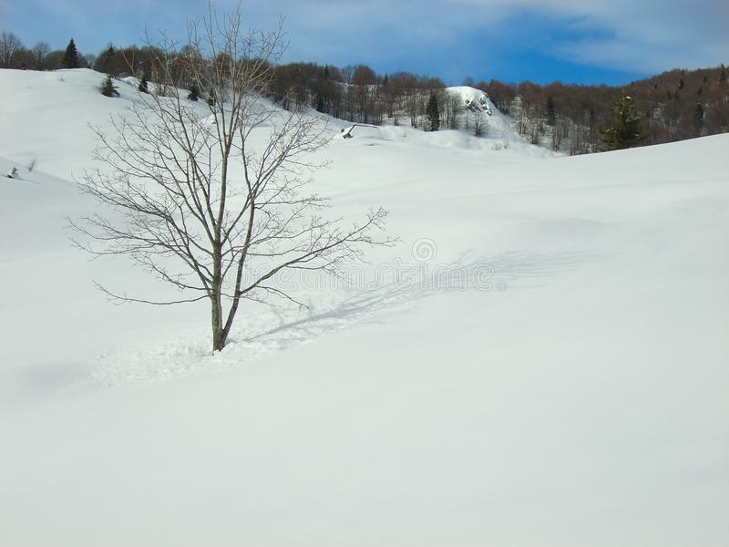 Close up single tree in blanket of smooth soft snow. Close up of single tree with no leaves on a snow hill with blanket of smooth soft snow with shadow of tree royalty free stock photography