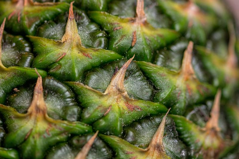 Close-up of the skin of a ripe pineapple. Fresh pineapple texture, Macro, Background, Wallpaper.  royalty free stock photo