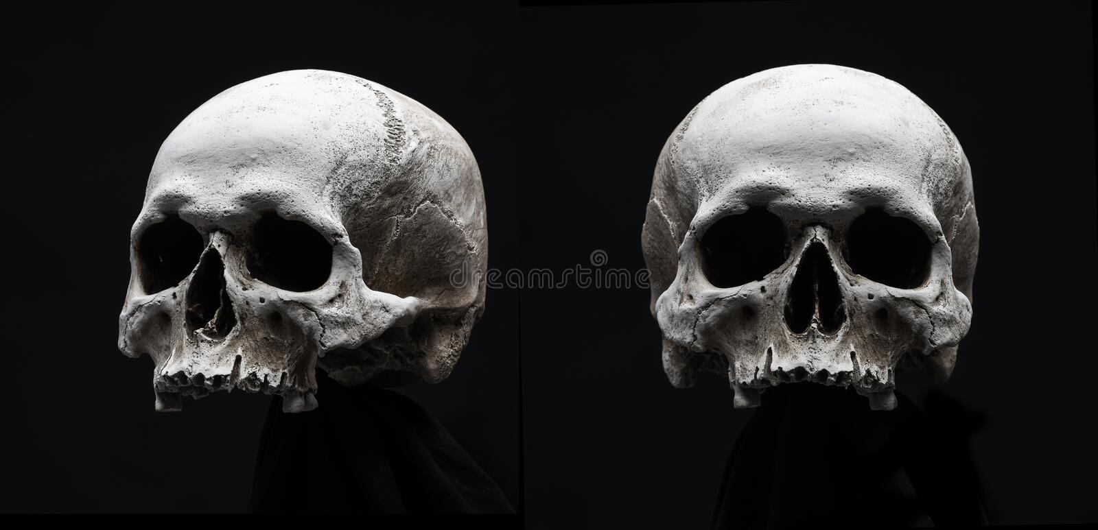 Skulls isolated on black. Close up of skulls isolated on black with copy space royalty free stock photo