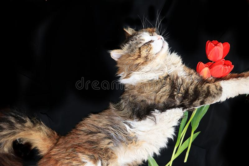 Close-up of a sleeping cat, a cat has found its home and is happy rescue animals from the street. Cozy house with pets royalty free stock images