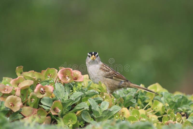 Close up of a small bird at Bodega Headlands in Northern California stock photo