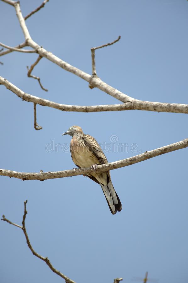 Small bird on branch tree. Close up small bird on branch tree stock photography