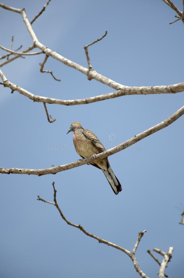 Small bird on branch tree. Close up small bird on branch tree royalty free stock images
