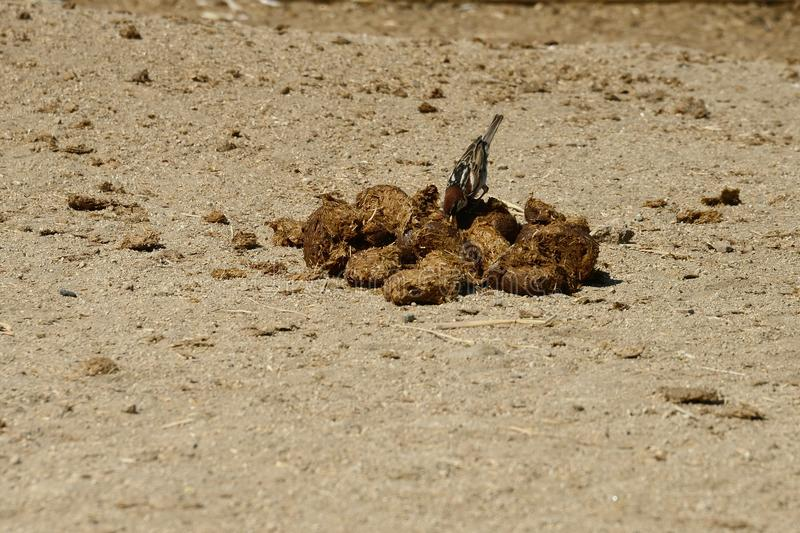 Close up of a small bird stock photos