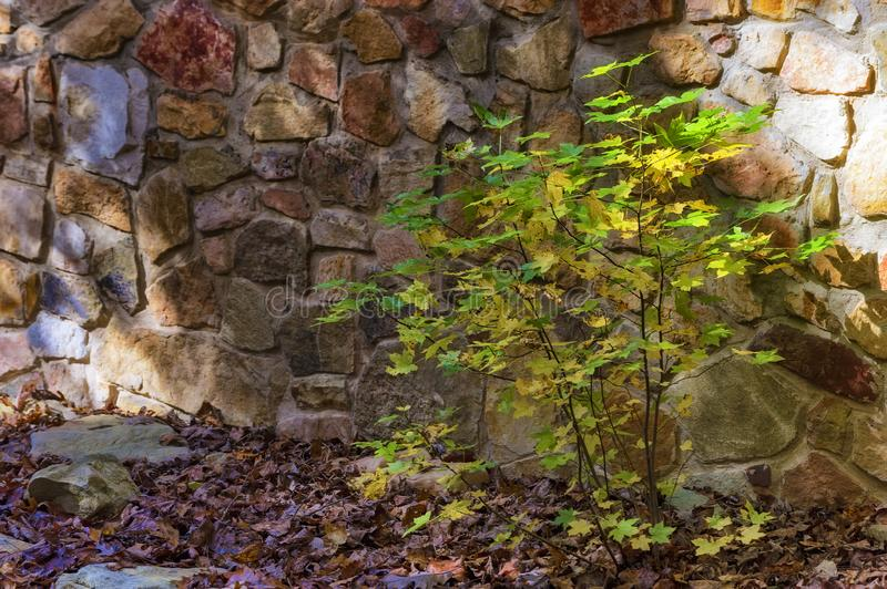 Close up of small bush against a rock wall royalty free stock photos