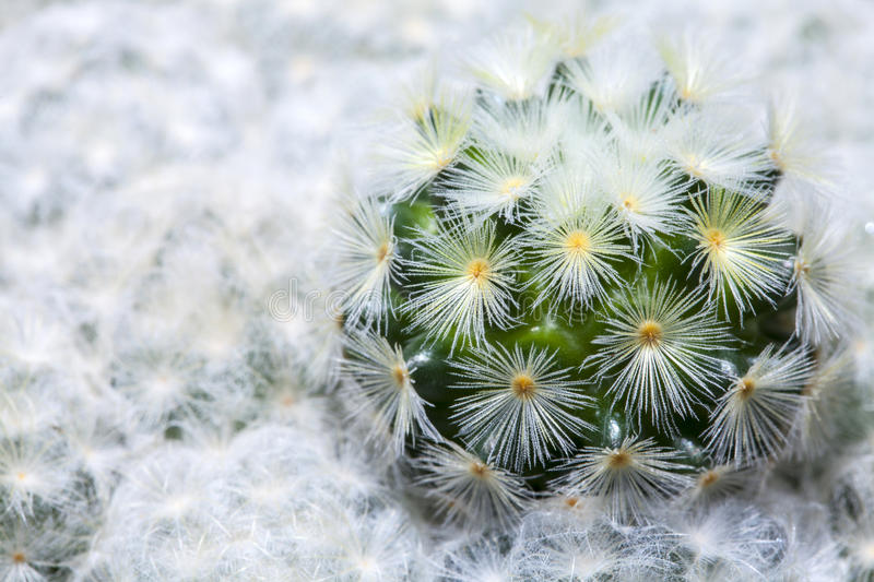 Close up of small cactus in the pots royalty free stock images
