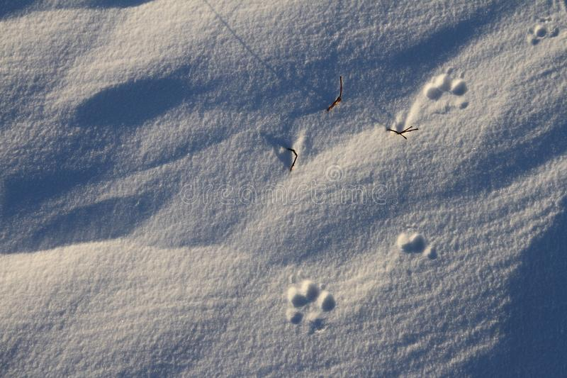 Close-up of small dog paw prints or tracks in snow near Arviat. Nunavut Canada stock photography
