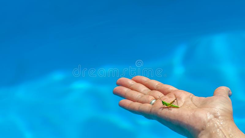 Closeup of small green grasshopper or grig seats on middle aged woman's hand in the pool on blue water blurred background stock photo