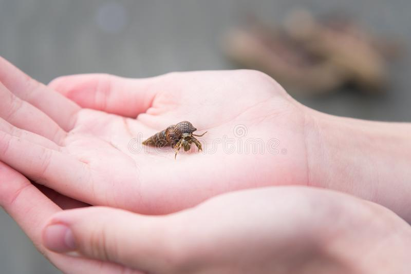 Close-up of small hermit crab held in child`s hands stock photos