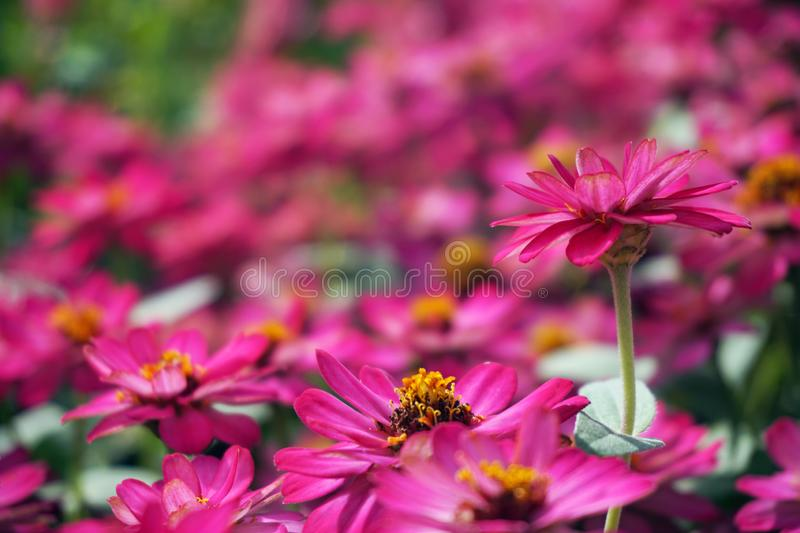 Small pink flowers field background stock image