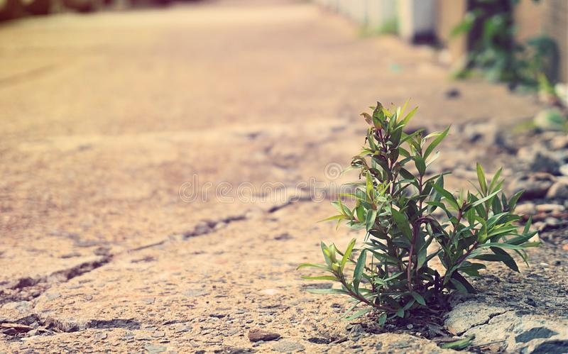 Close up small plant break through cement on street to survive a. Nd growing into sunlight. Hope, survival and beginning concept stock photography