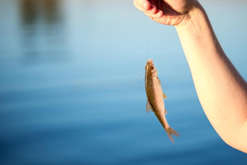 Close-up small redeye fish on a hook in hand against blue lake or river water. Newcomer fishing background. Copyspace.  stock photography