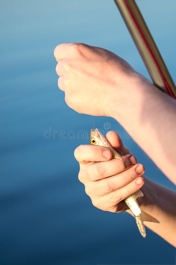 Close-up small redeye fish in man hand against blue pond water. Fisherman taking out hook. Newcomer fishing background. Copysp. Ace stock photo