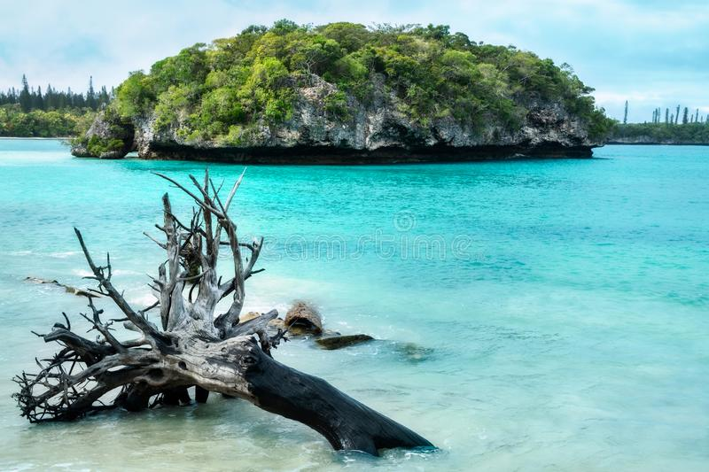 Kanumera Bay with an uprooted tree in foreground at Isle of Pines, New Caledonia. Close up on the small rocky island in the middle of Kanumera Bay with an stock images