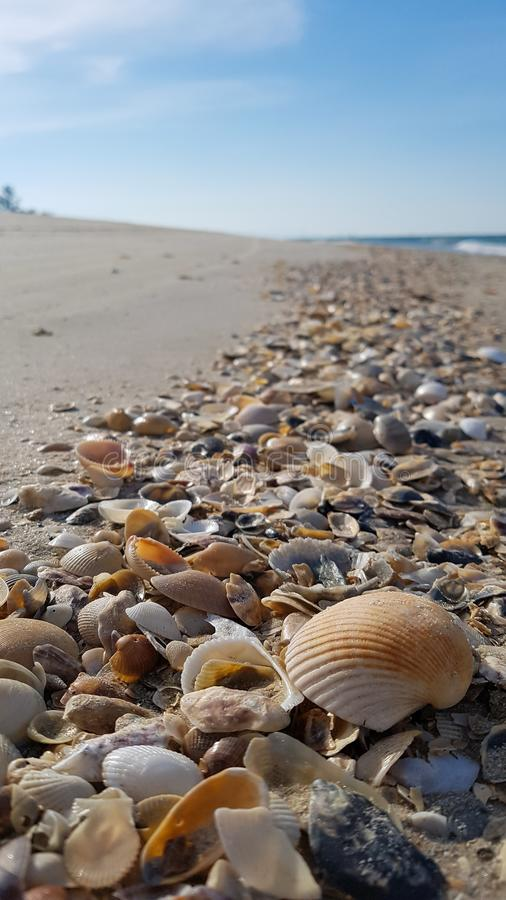 Close up of small sea shells on the beach at Talumpuk cape , Thailand stock photography