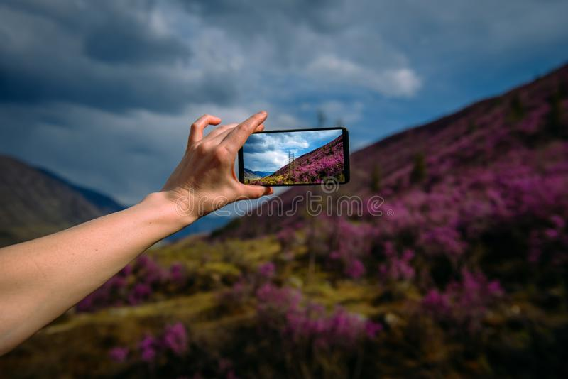 Close-up of smartphone in hand. Unknown woman using a gadget takes photos of a mountain slope covered with pink flowers. Focus on hand and phone. Digital stock photos