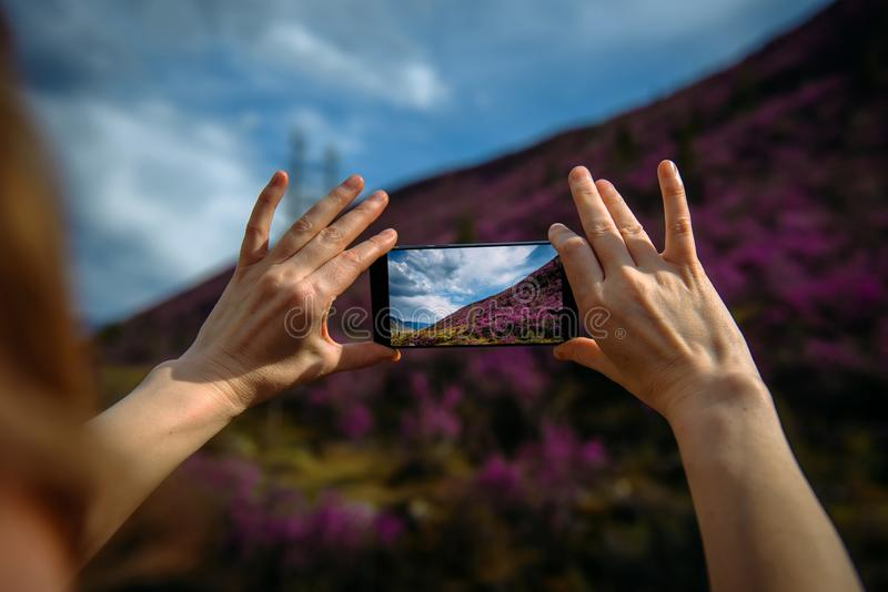Close-up of smartphone in hands. Unknown woman using a gadget takes photos of a mountain slope covered with pink flowers. Photo. Close-up of smartphone in hands stock photo