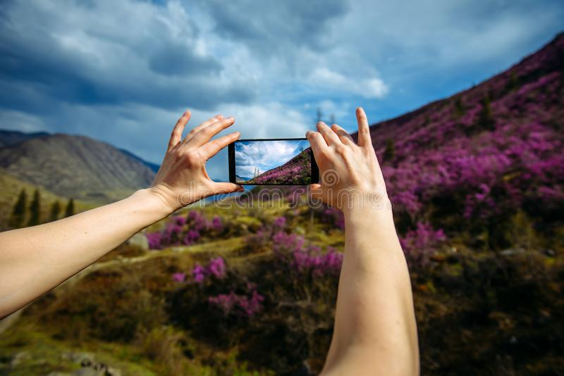 Close-up of smartphone in hands. Unknown woman using a gadget takes photos of a mountain slope covered with pink flowers. Focus on hands and phone. Digital stock image