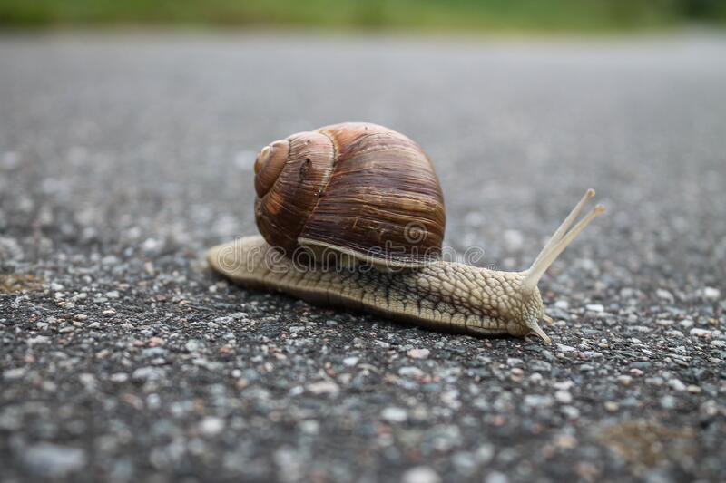Close-up of Snail on Ground royalty free stock images