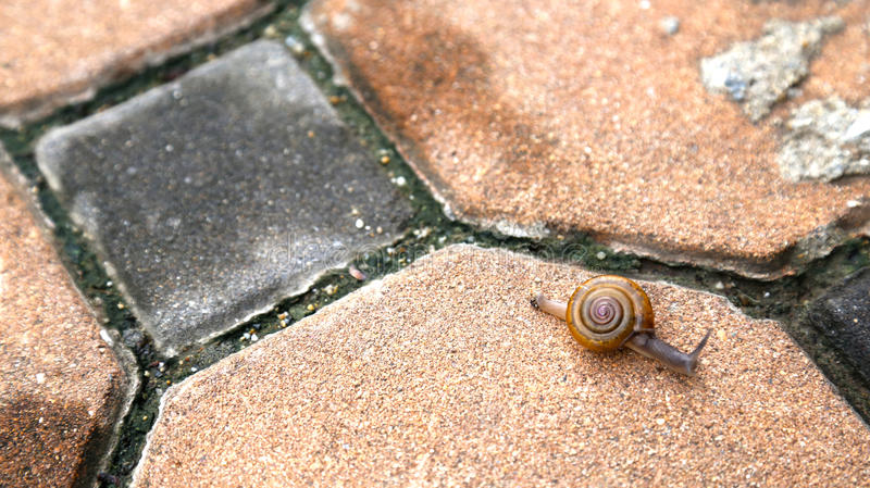 Close-up of snail on pavement stock photography