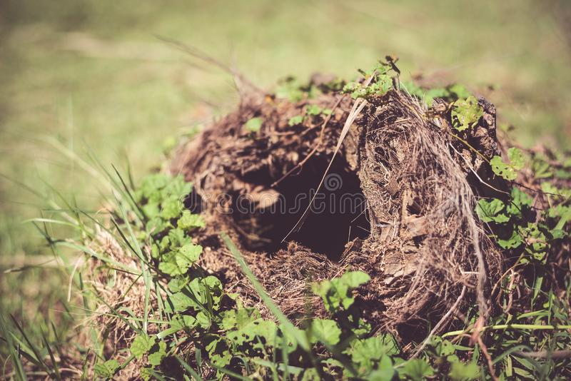 Close up of snake hole in the park. Animal living and nature concept. Tunnel, clay, mud, outdoor, deep, burrow, earth, ground, dirt, rat, grass, circle royalty free stock photography